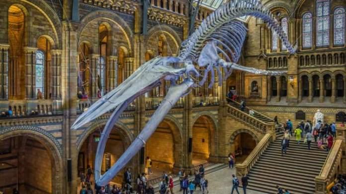The Natural History Museum é uma das atrações gratuitas em Dublin