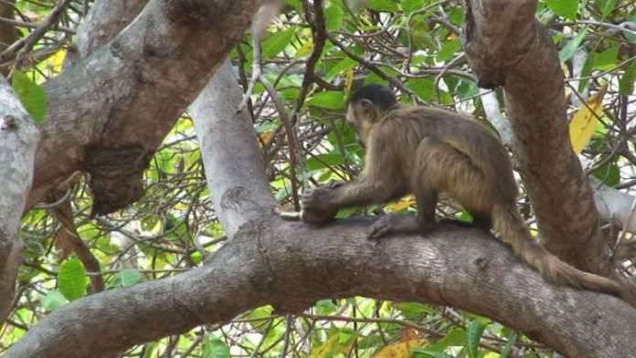 Trilha dos Macacos em Capitólio-MG