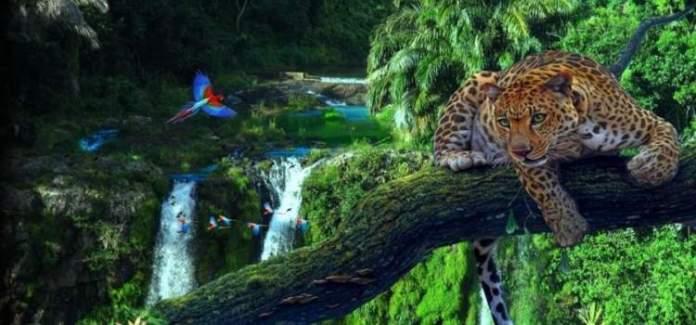 Amazônia é um dos Melhores destinos para viajar ainda em 2018
