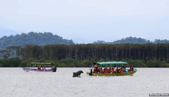 Bahía de los Delfines em Bocas del Toro Panamá
