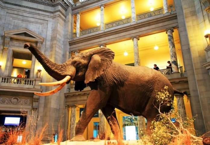 Conhecer o Museu de História Natural uma das coisas para fazer em Nova York