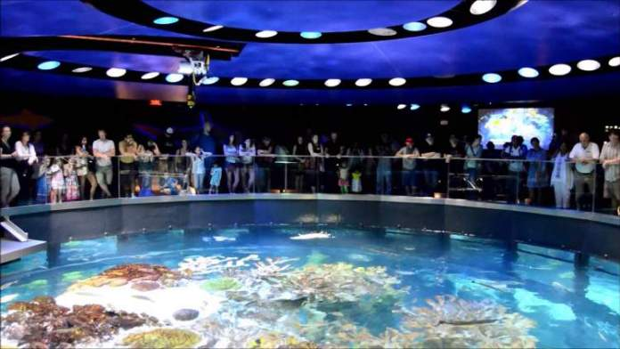 Conhecer o New England Aquarium é uma das razões para passar as férias em Boston