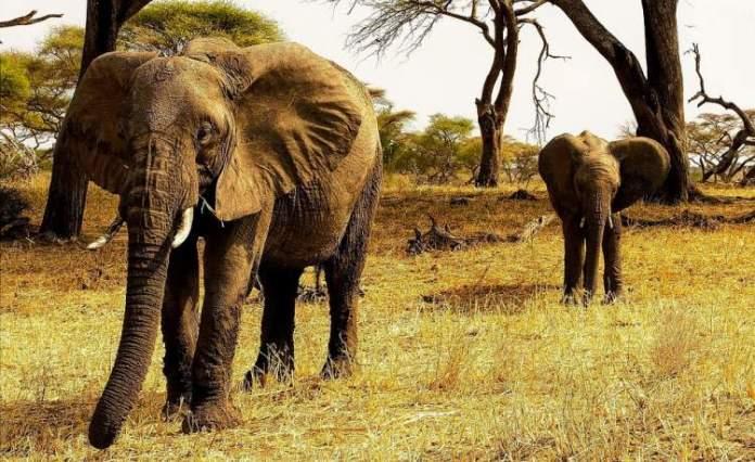 Savanas africanas da Tanzânia é um dos lugares mais lindos do mundo