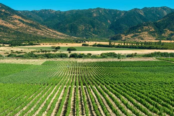 Vinhedo Vale de Colchagua no Chile