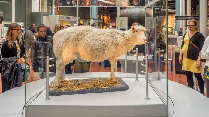 Ovelha Dolly, no Museu Nacional da Escócia em Edimburgo na Escócia.