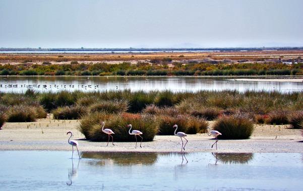 Un estudio del CSIC destaca la contaminación de nitratos en Doñana – La otra Andalucía