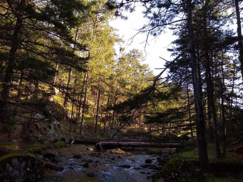 Bosques de Durango, México