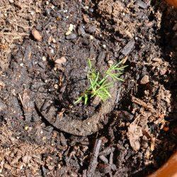 Update: My Gro-Ables Herb Garden