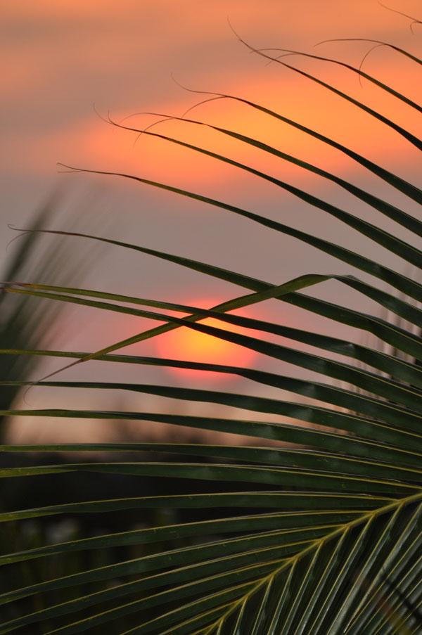 Zon-palm