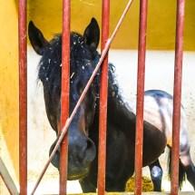 Largo Palacio de Queluz horse 8.12.16 _2-1