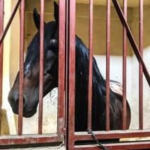 Largo Palacio de Queluz horse2 8.12.16 _2-1