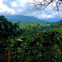 Jardin Coffee Plantations2
