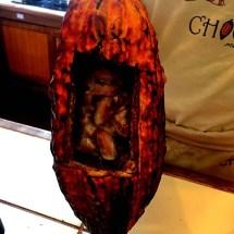 Chocolate Pod