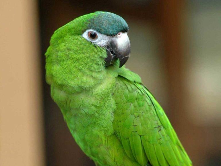 green-parrot-names-wallpaper-2