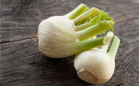 fennel-bulbs_3278929b