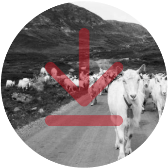BOND-repository_norway_Norwegian-Agricultural-Cooperatives