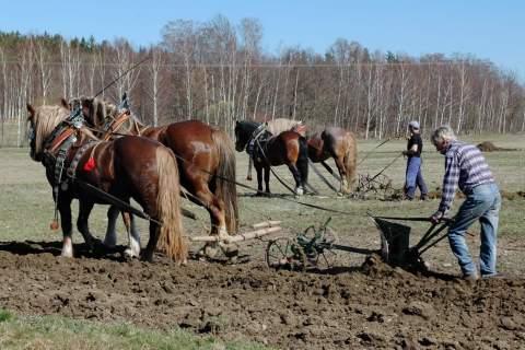 Farma Lukava