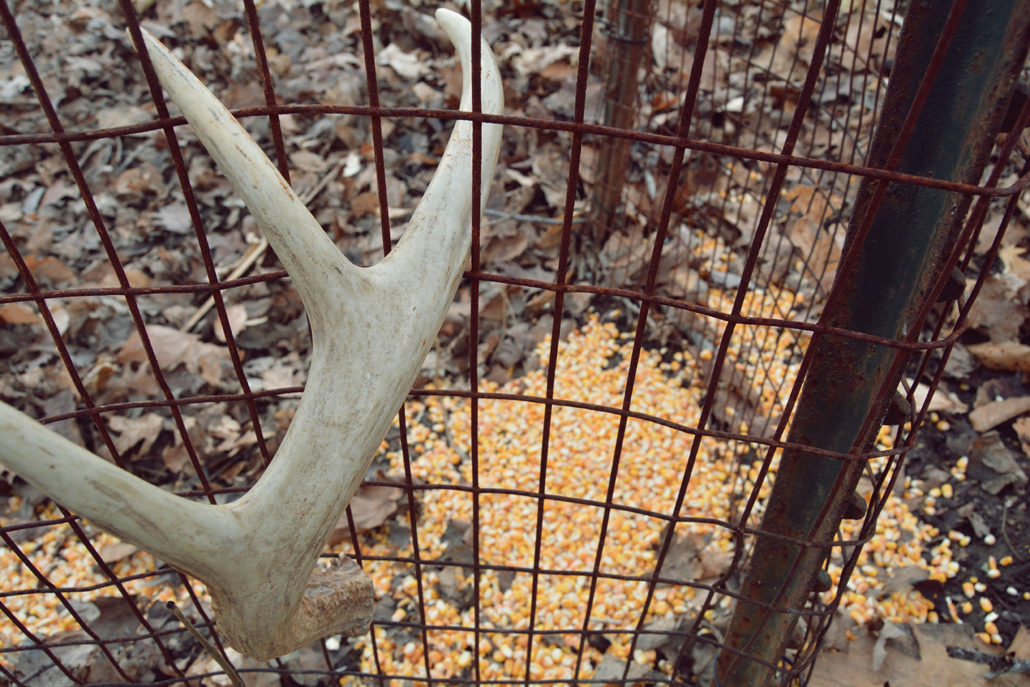 Why You Shouldn T Use Shed Antler Traps Bone Collector