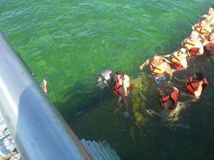 Varadero delfini