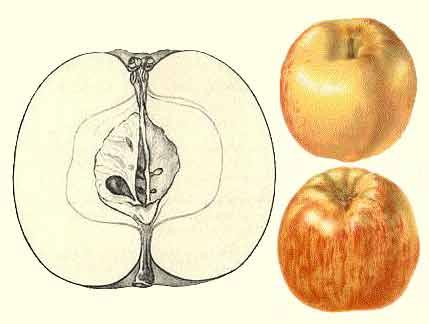 Gravensteiner vrucht