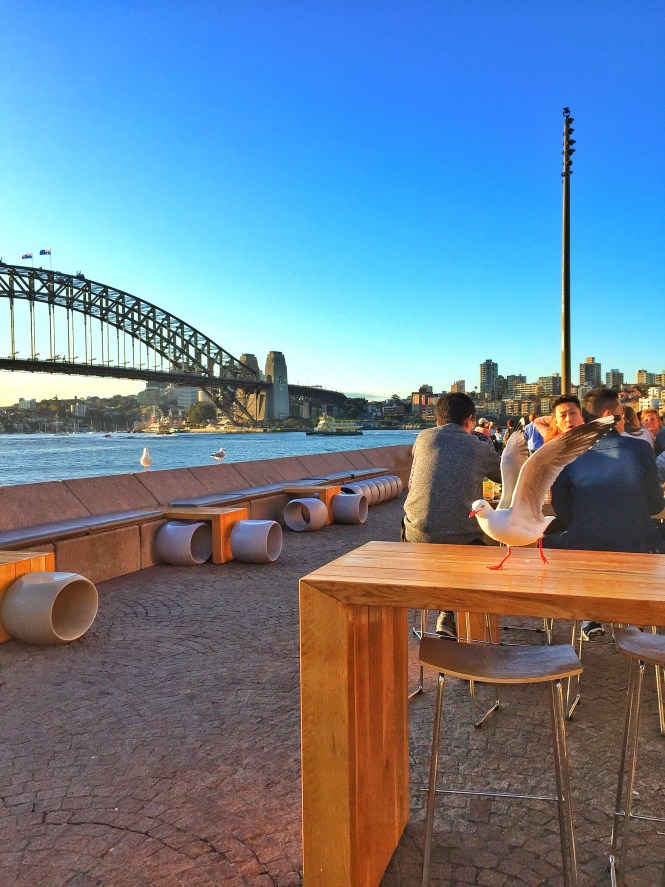 sydney australia travel guide opera house sunset harbour bridge opera bar