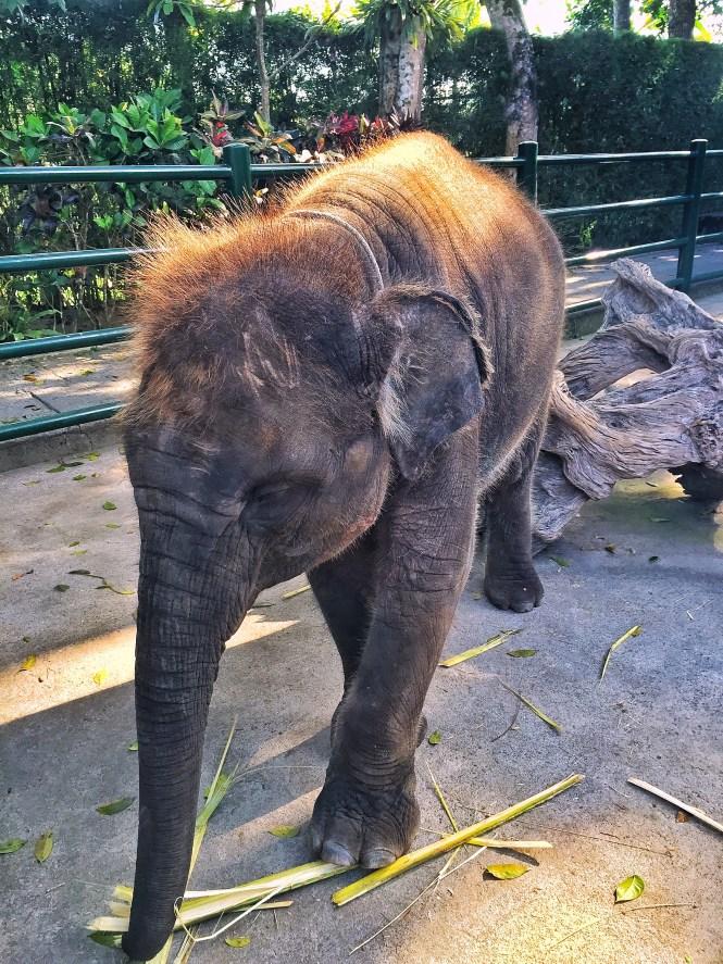 baby elephant bali