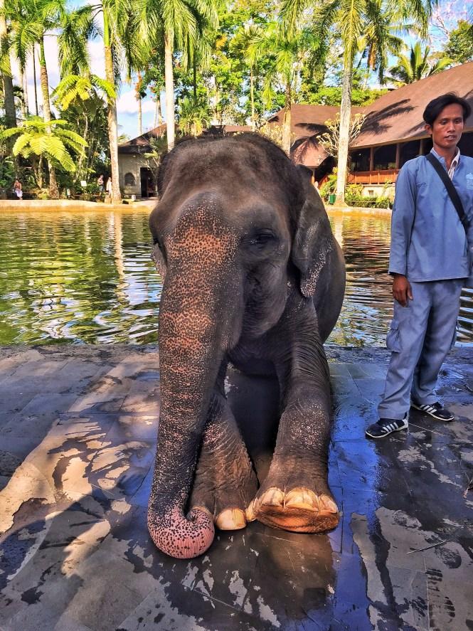 elephant safari park taro ubud balli