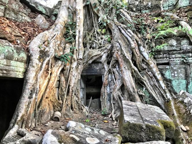 Angkor wat siem reap cambodia tree