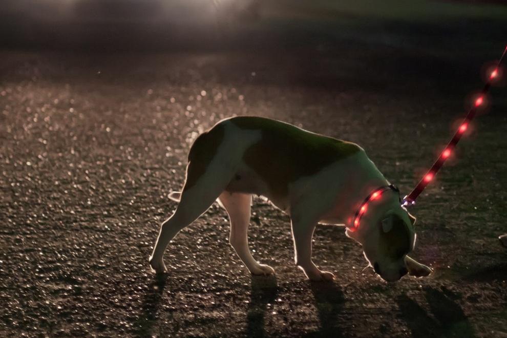 LED Lighted Dog Leash Collar By Dog-E-Glow