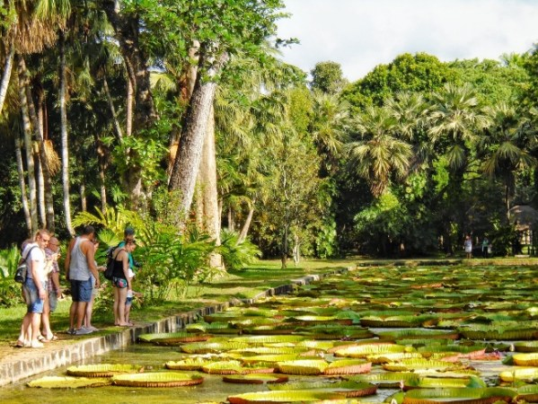 Pamplemousses Garden - Giant Water Lillies