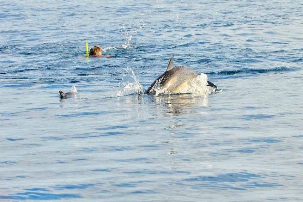 Mauritius - Swimming next to Dolphins