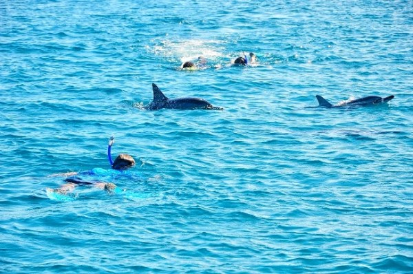 Mauritius - Swimming with Dolphins