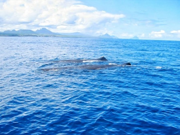 Mauritius - Two Whales