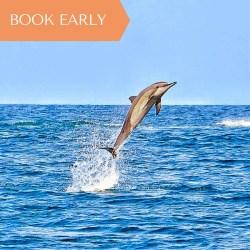 Dolphin Flip