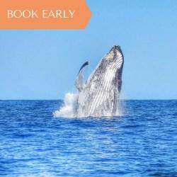 Mauritius - Majestic Whale