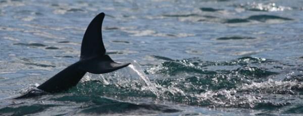 Mauritius Whale Sighting