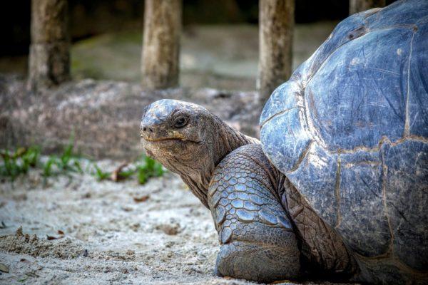 giant tortoise history tour eco trip