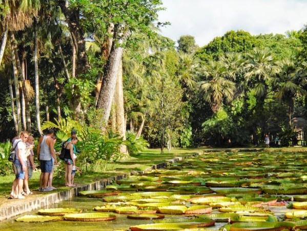 Pamplemousses Garden - Giant Water Lillies