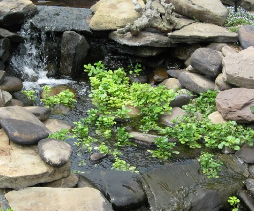 Aquatic Soil Pond Plants