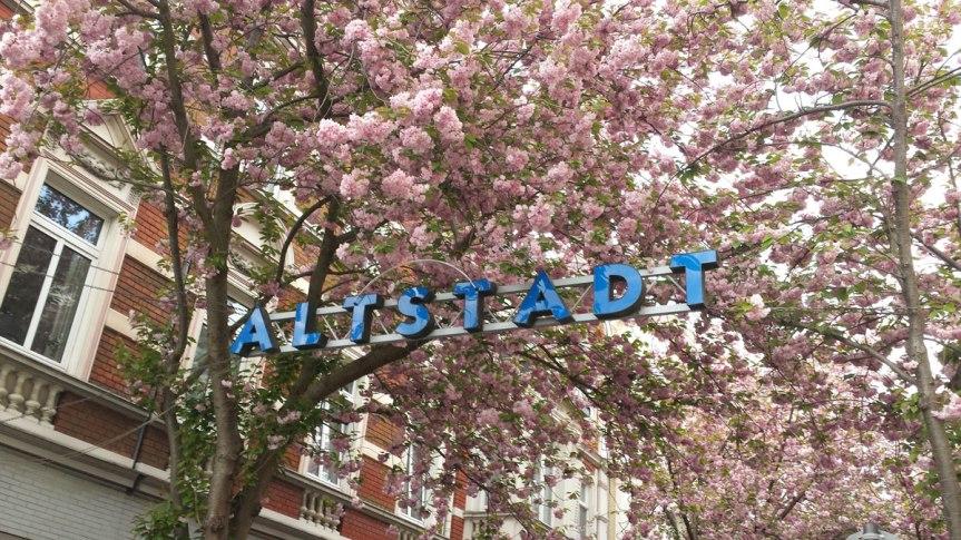 Kirschblüte 🌸 in Bonn: Maskenpflicht in der Altstadt verlängert