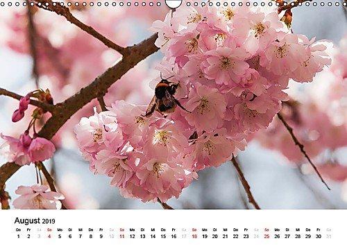Bonn – Kirschblütenfest in der Altstadt (Wandkalender 2019 DIN A3 quer)