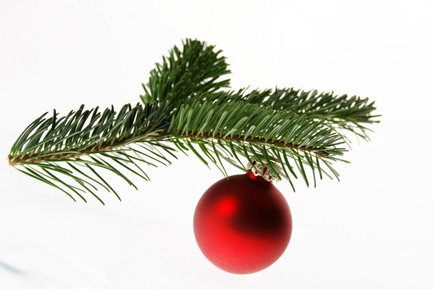 Leuchtende Tannenbäume sorgen in Bonn für Weihnachtsstimmung