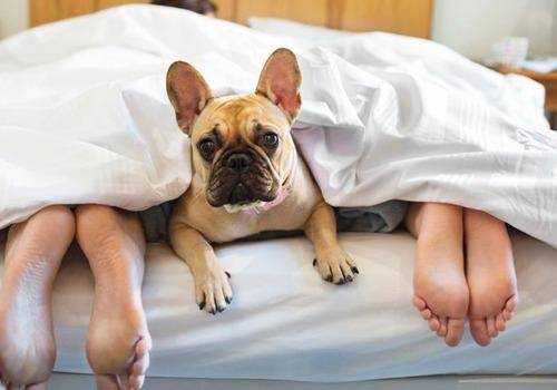 Dogs & Breakups both are very emotional aspects in a man's life. A breakup affects your pet.
