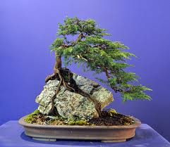Types Of Bonsai Trees The 5 Most Common Styles