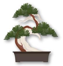 Sharimiki (deadwood) Bonsai style
