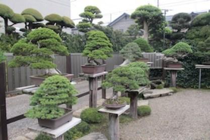Kebun bonsai Kimura