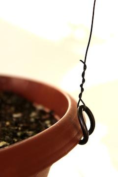 Tensor en bonsái