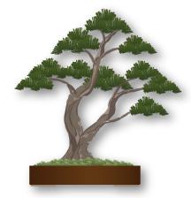 Estilo Bonsái Sokan, doble tronco, dos troncos