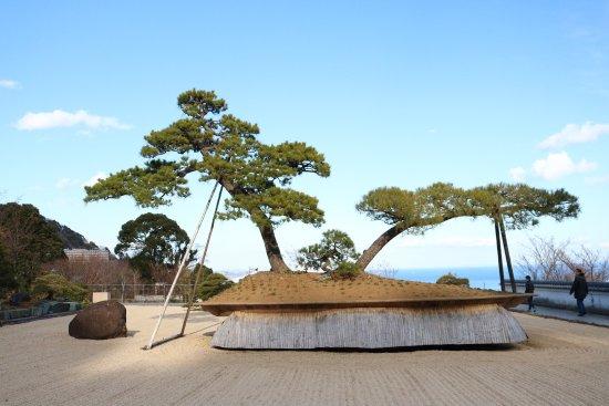 The 7 Oldest Bonsai Trees In The World Bonsai Sanctum