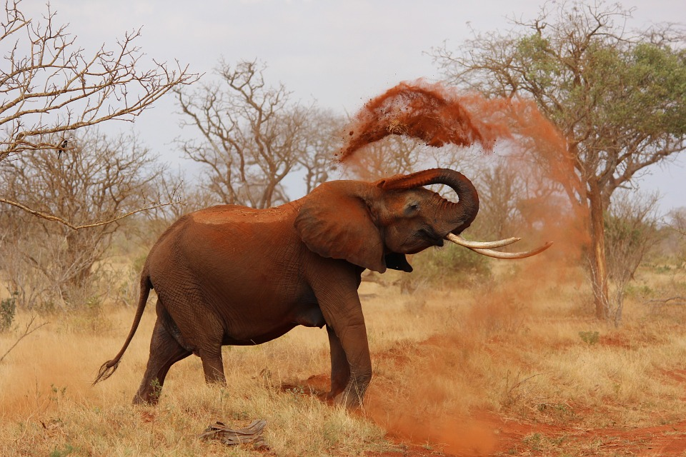 elephant-111695_960_720